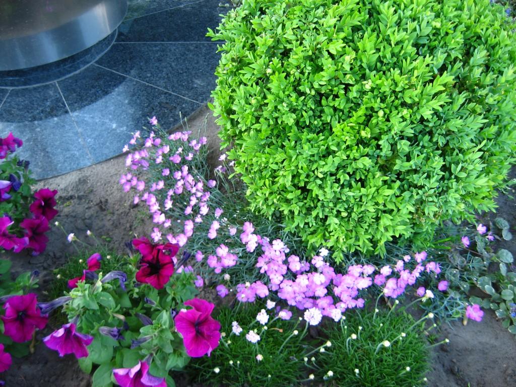 en samling blomster